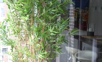 City Bamboo
